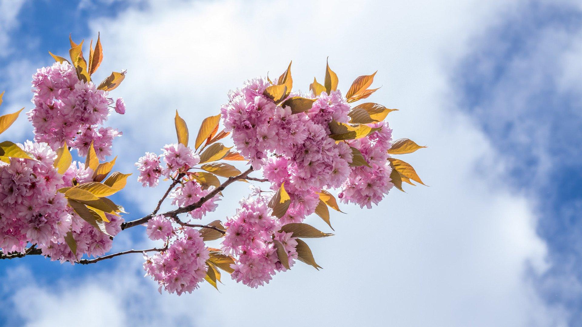 春季减肥最有效的方法